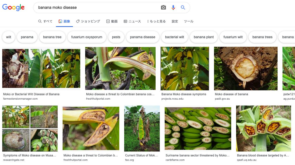 banana moko diseaseの検索結果