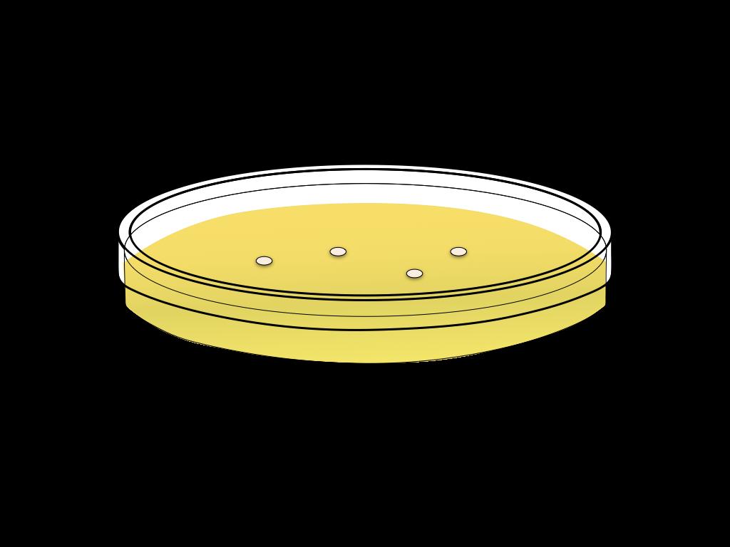 培養中のバクテリアのフリーイラスト画像3