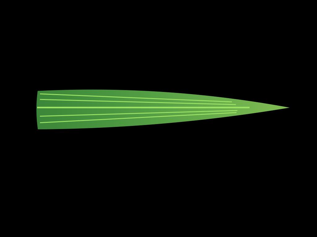 単子葉類の葉フリーイラスト画像