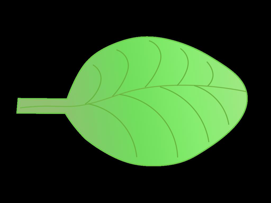 双子葉類植物の葉のフリーイラスト画像