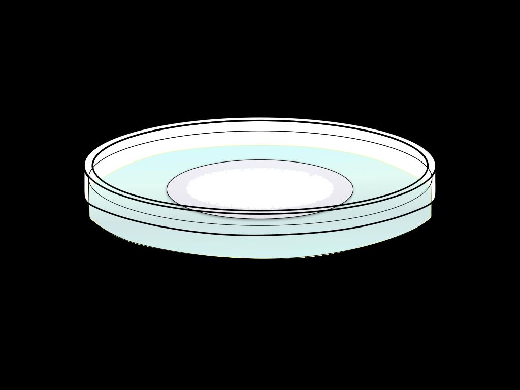 培養中の白いカビのフリーイラスト画像1