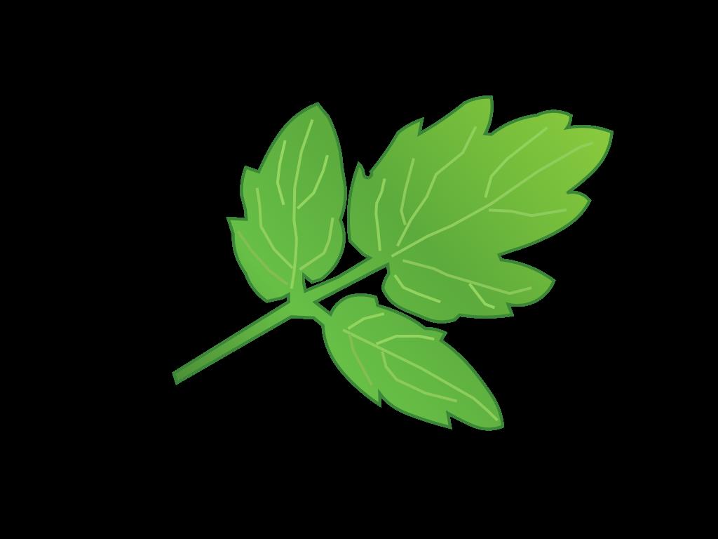 トマトの葉フリーイラスト画像