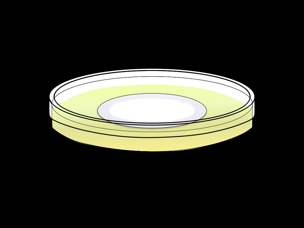 培養中の白いカビのフリーイラスト画像2