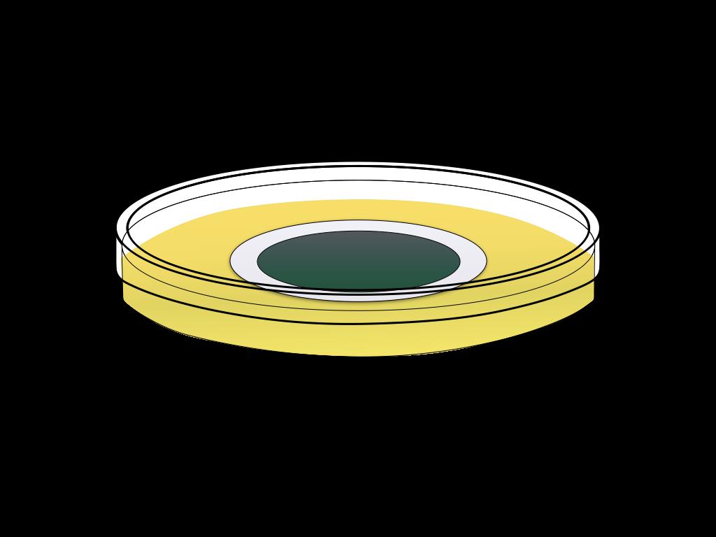 培養中の緑のカビのフリーイラスト画像3