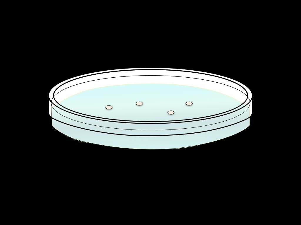 培養中のバクテリアのフリーイラスト画像1