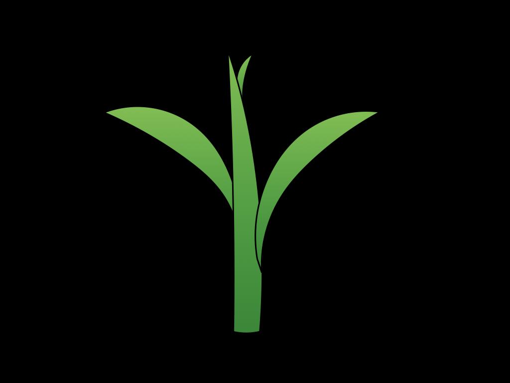 単子葉類植物のフリーイラスト画像