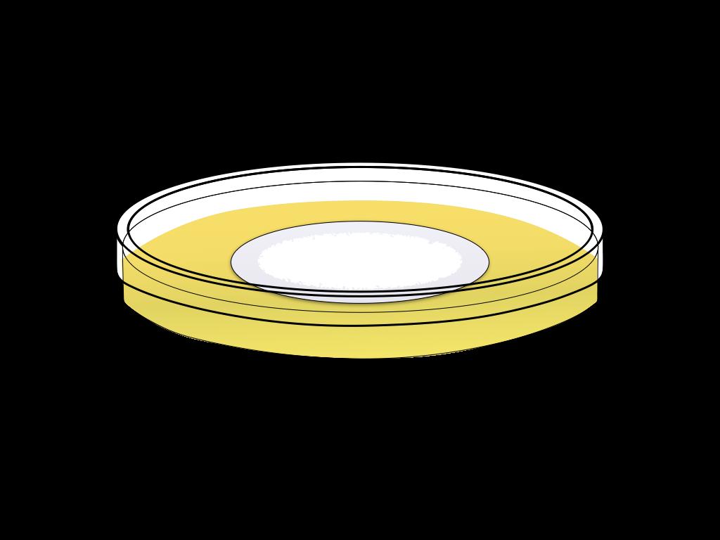培養中の白いカビのフリーイラスト画像3
