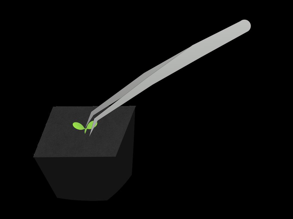 植え替えのフリーイラスト画像